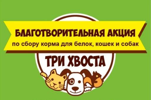 Петербуржцы собирают корм для котов, собак и белок | Фото: vk.com / ДМК Дом молодежи «Колпинец»